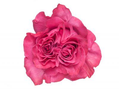 Ah!maze Roses